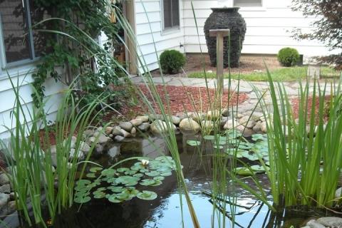 3 Reasons your Pond needs Aquatic Plants