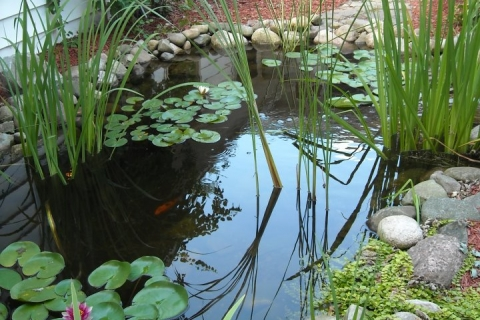 Thorough Planning will Help to Ensure Your Backyard Pond is Healthy and Attractive