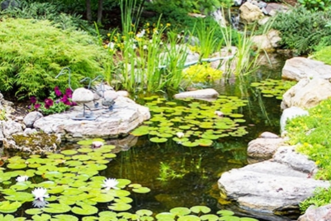3 Reasons to Include Aquatic Plants in Your Backyard Pond
