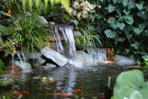 Enhance Your Backyard Pond with Our Pond Enhancements