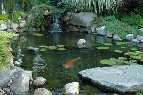 Planning the Perfect Pond Design for Your Backyard Pond