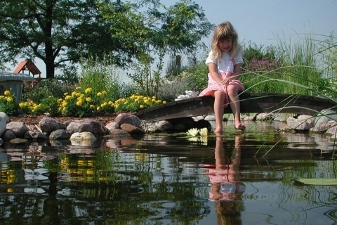 Things to Consider When Building a Backyard Pond or Water Feature