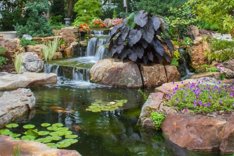 Enhance Your Backyard Pond This Winter with These Five Pond Design Ideas